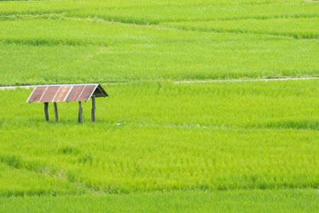 Countryside, Hut in the rice fields at Nan Thailand