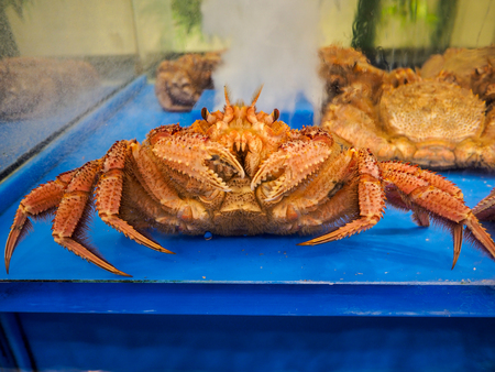 Big Alaskan lifed  crab in underwater tank