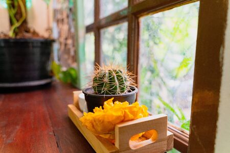 Beauty cactus decorate table in summer style