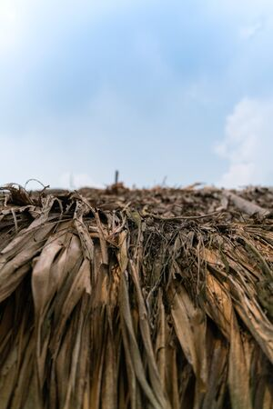 Close up Thatched roof with bright blue sky