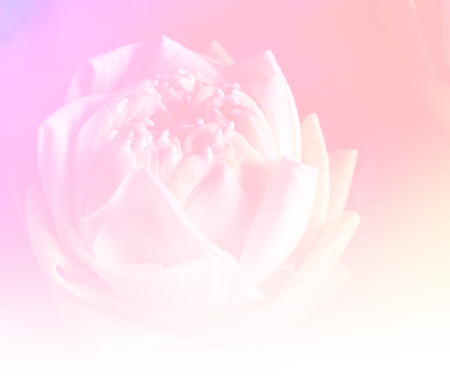 Flower lotus background, made with color filter effect