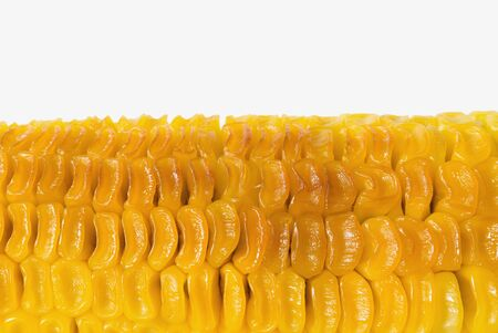 Part of unappetizing grilled sweet corn on white background
