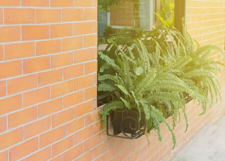 Red brick wall decorated with green fern