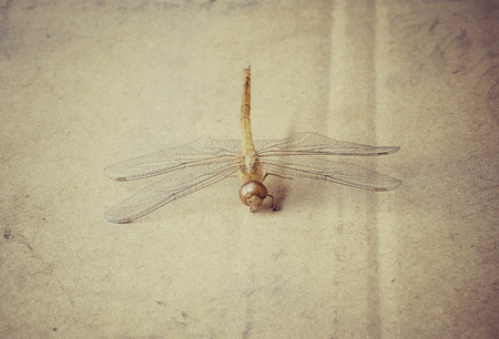 Dragon fly death carcass on dirty cardboard with vintage effect Stock Photo