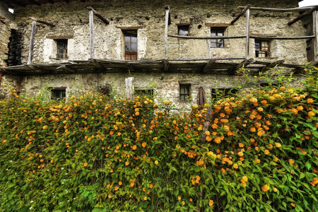 Depopulation of the mountain. Old abandoned mountain house in Mindino, municipality of Garessio, Piedmont, Italy. ... but the flowers still bloom.