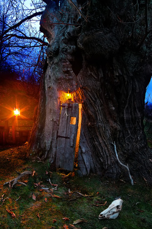 Village of Mindino, municipality of Garessio, Piedmont, in Italy, this huge centuries-old chestnut with a door is now uninhabited for years. It still produces many fruits.