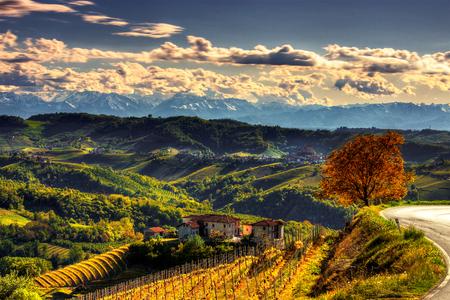 Das Licht der Langhe Das Sonnenlicht zieht die Ränder der Hügel der Langhe zwischen Diano und Serralunga d'Alba. Langhe, Provinz Cuneo, Piemont, Norditalien