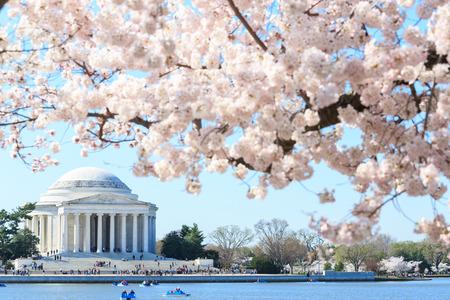 george washington: Amanecer en el Jefferson Memorial durante el Festival de los Cerezos en Flor. Washington, DC