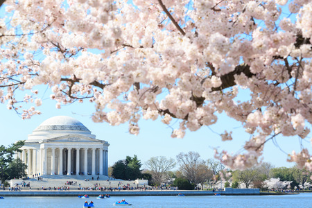 landmarks: Dawn at the Jefferson Memorial during the Cherry Blossom Festival. Washington, DC