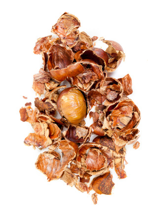top veiw: Top veiw Sweet Chestnut and chestnut bark on the white background Stock Photo