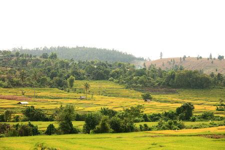 chaingmai: Hut and rice fields in Chaingmai,Thailand.
