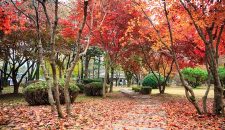 national parks: Autumn of National parks of nami island, Korea. Stock Photo