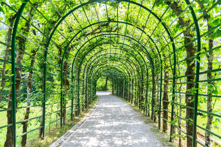 rood: Green archway in a garden, Germany.