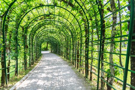 Green archway in a garden, Germany.