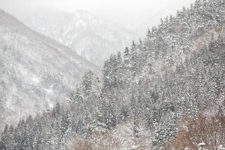 Beautiful Snow fall winter landscape with snow covered trees in shirakawago, Takayama, Japan