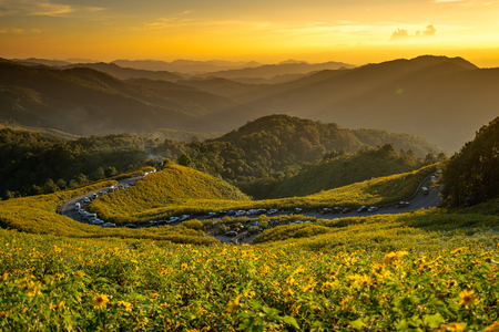 Tung Bua Tong is Mexican sunflower field with sunset in Mae Moh Coal Mine, Lampang Province, Thailand.