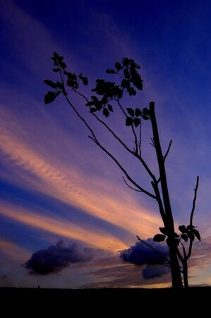 Silhouette of a Tree against Sunset photo