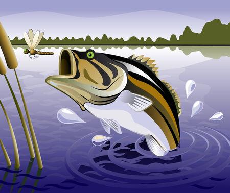 pez carpa: pez Vectores