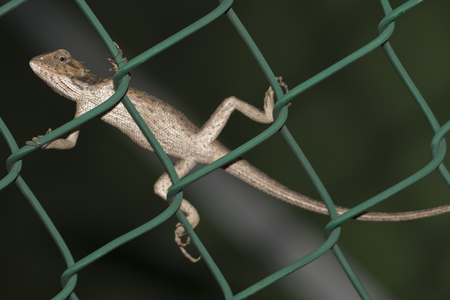 lizard sitting on a fence and looking at you