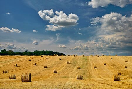 Fresh Hay bales in agriculture stubble field under blue sky during wheat harvest time