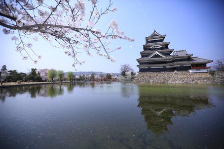 matsumoto: Matsumoto castle with sakura bloom Editorial