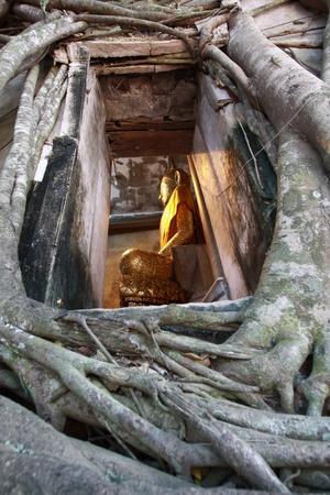 bang: Tree grow up cover the church, Wat Bang Kung, Thailand Stock Photo