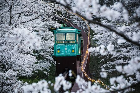 fulfill: Railway to Heaven, Funaoka Park Along the way of tram to be fulfill with white Sakura - Osaka, Japan