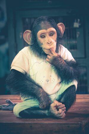 samut prakan: Cute Chimpanzee Wear Clothing Sit on Table - Samut Prakan, Thailand Stock Photo
