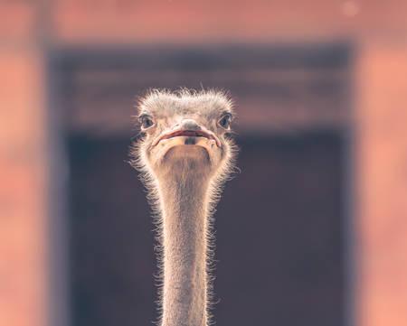 samut prakan: Ostrich Head in Square frame - Samut Prakan, Thailand