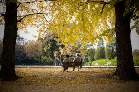 イチョウ ParkShowa で祖父母記念、立川 - 東京、日本 写真素材