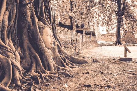 cabeza de buda: Ra�z de Banyan Tree enwrap La cabeza de Buda - Ayutthaya, Tailandia Foto de archivo