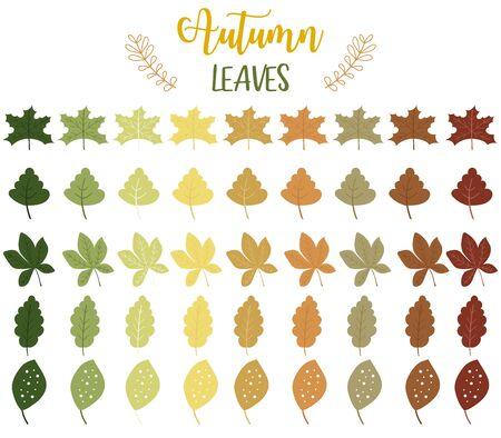 Autumn set with maple,leave,flower illustration for sticker,postcad,birthday invitation