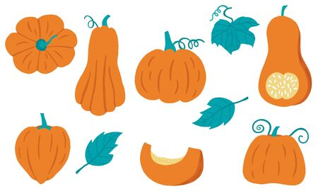 Cute pumpkin object collection.Whole, cut in half, sliced on pieces pumpkin. Vector illustration for icon, sticker,printable 일러스트