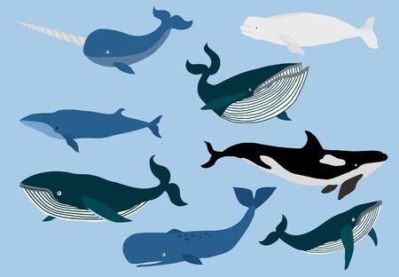 Simple whale character.Vector illustration character doodle cartoon Illusztráció