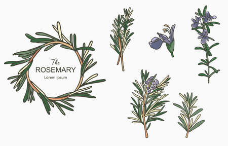 Line herbal collection with rosemary.Vector illustration for icon,sticker,printable and tattoo 일러스트