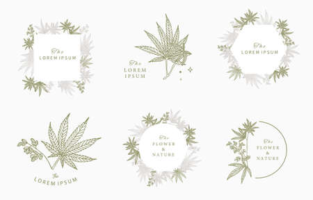 cannabis frame collection.vector illustration for banner and product