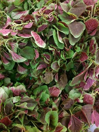 closeup: Closeup of fresh red amaranth