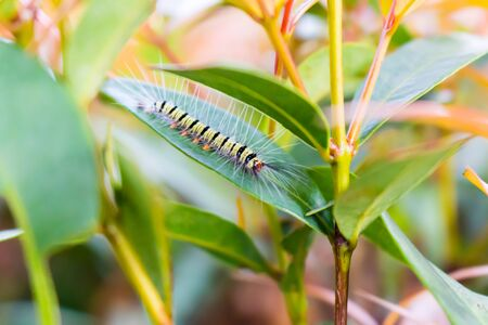 Kleiner Wurm auf grünem Blatt.