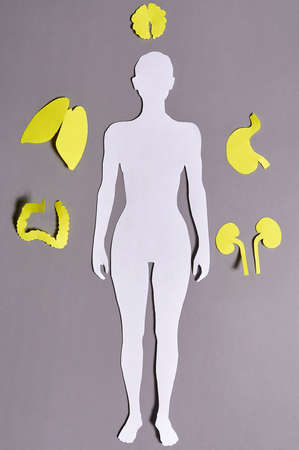Paper silhouette of a woman with yellow organs on a gray background