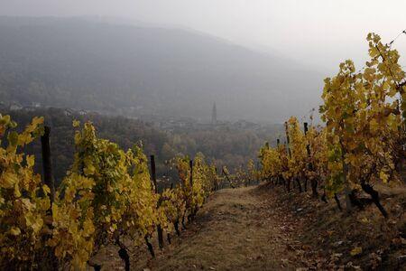 Panorama of Chiomonte from vineyard 版權商用圖片