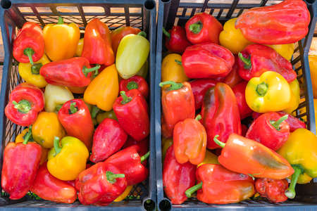 Red and yellow ripe freshly picked peppers in a plastic box. High quality photo Stock Photo