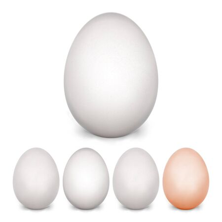 chicken and egg: Chicken Egg Set. Isolated On White Background. Realistic Blank Of Natural Ecological Product. Healthy Food. Easter Symbol. Photo realistic Egg Template For Your Design. Vector Illustration