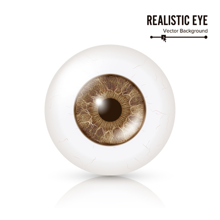 oversee: Photo Realistic Eyeball. Human Retina. Vector Illustration Of 3d Human Glossy Eye With Shadow And Reflection. Front View. Isolated On White Background Illustration