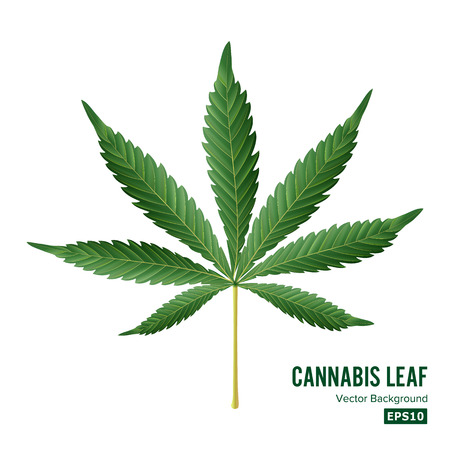 Cannabis Icon Vector. Medical Green Plant Illustration Isolated On White Background. Graphic Design Element For Printables, Web, Prints