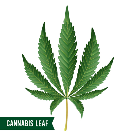 Marijuana Leaf Vector. Green Hemp Cannabis Sativa or Cannabis Indica Marijuana Leaf Isolated On White Background. Medical Plant Illustration