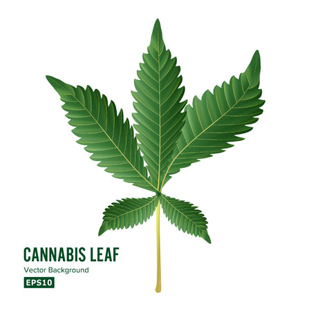 Marijuana Leaf Vector. Green Hemp Cannabis Sativa or Cannabis Indica Marijuana Leaf Isolated On White Background. Medical Plant Иллюстрация