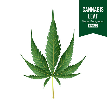 Cannabis Vector. Medical Green Plant Illustration Isolated On White Background. Cannabis Graphic Design Element For Printables, Web, Prints Illustration
