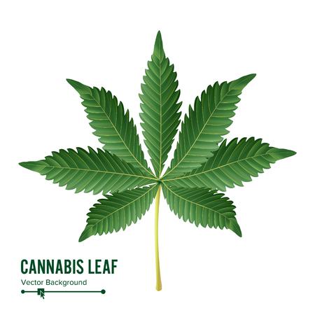 Cannabis Leaf Vector. Green Cannabis Cannabis Sativa or Cannabis Indica Leaf Isolated On White Background. Medical Plant