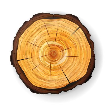 Cross Section Tree Wooden Stump Vector. Round Cut With Annual Rings 版權商用圖片 - 75684544