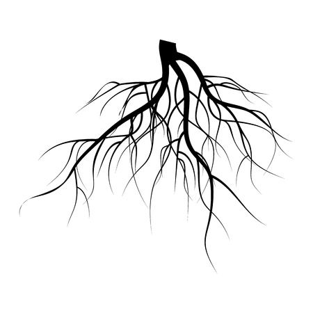 Tree Underground Roots Vector Set. Illustration Isolated On White Background Illustration